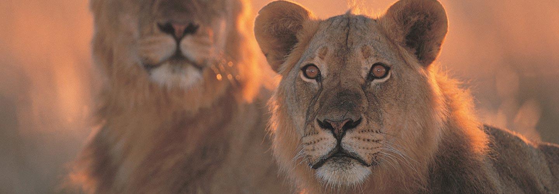 Safari Near Johannesburg