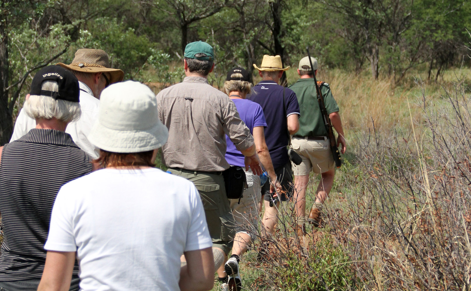Bush Walks Near Johannesburg